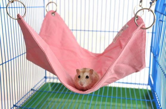 Cloth-totoro-hamster-Lord-hammock-supplies-guinea-pig-small-squirrel-mat-font-b-cot-b-font